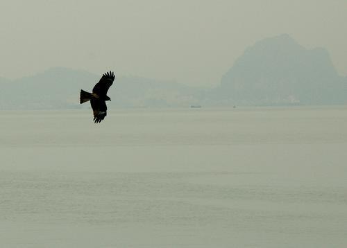 halonghawk.jpg