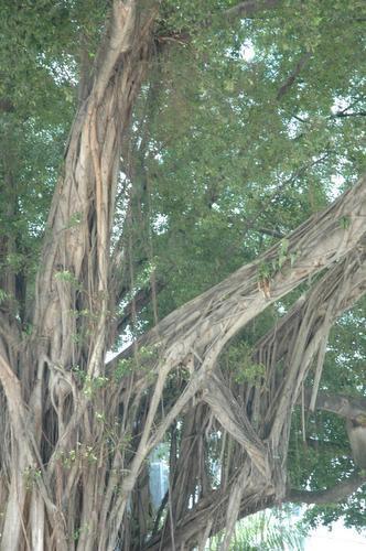 rootsystem.jpg